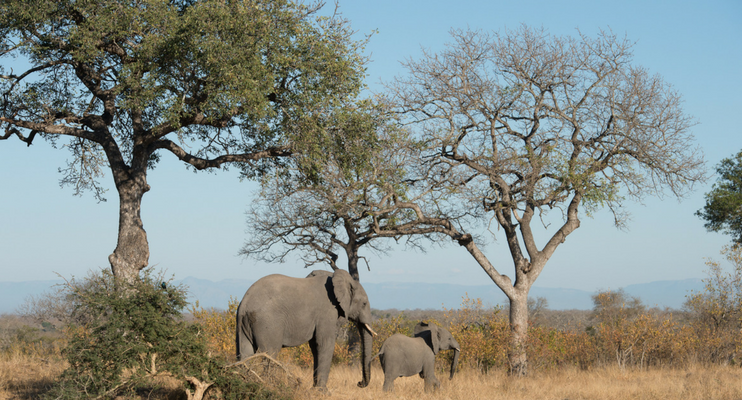 JJa14-sunway-safari-south-africa-kruger-elephants-wildlife