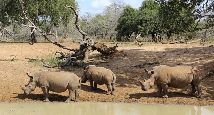 JJa14-sunway-safari-south-africa-mhkuze-rhino-waterhole-wildlife-conservation