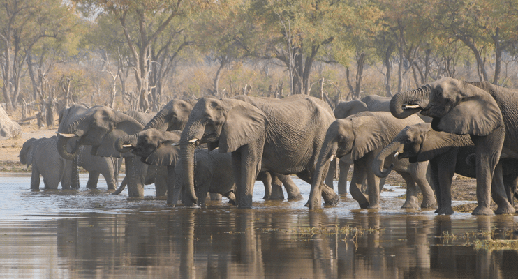BT13-BT14-sunway-safari-africa-botswana-indafrica-zimbabwe-camping-south-africa-elephants-herd-lake-water