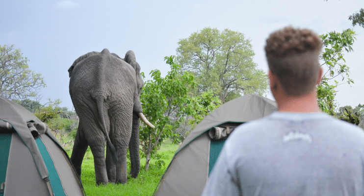BT13-BT14-sunway-safari-africa-botswana-indafrica-zimbabwe-camping-south-africa-tents-elephants-up-close