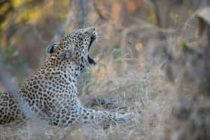 South Africa Scenic Route Camping Safari - Sunway Safaris Camping Trip
