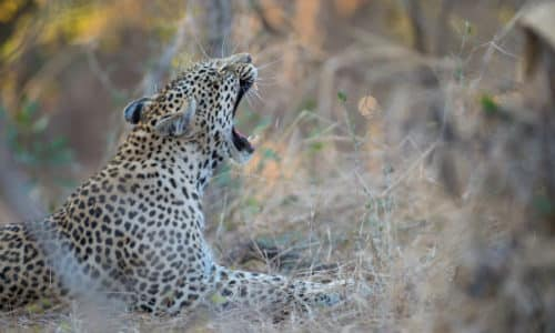 South Africa Scenic Route Camping Safari - Sunway Safaris Camping Trip