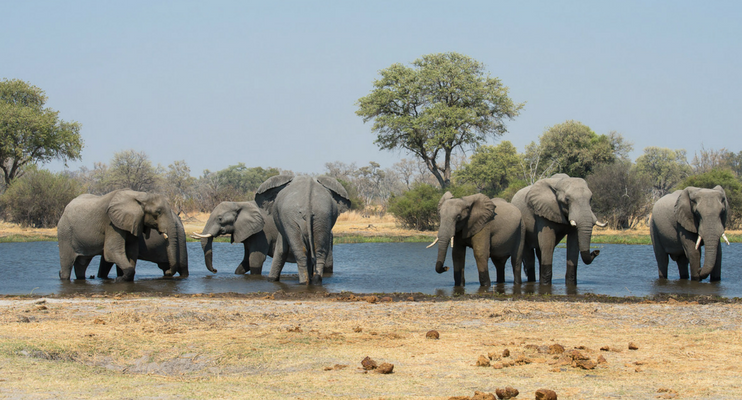 BP10-sunway-safari-africa-botswana-indafrica-zimbabwe-camping-south-africa-elephants-water-herd