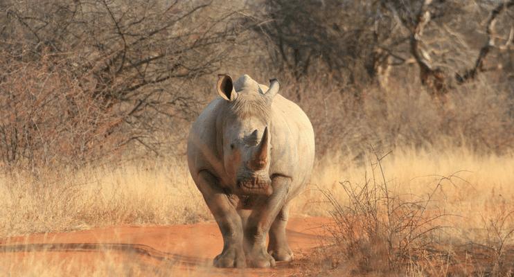 LM22-sunway-safari-indafrica-planning-zambezi-malawi-trade-route-kruger-rhino-south-africa
