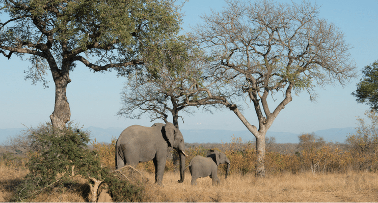 LM22-sunway-safari-indafrica-planning-zambezi-malawi-trade-route-kruger-south-africa-elephant-baby-mother