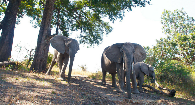 indafrica-sunway-safaris-expeition-northern-zambia-exploring-wildlife-elephants