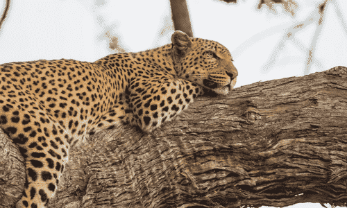 Travel Tips: Preparing for your first African Safari
