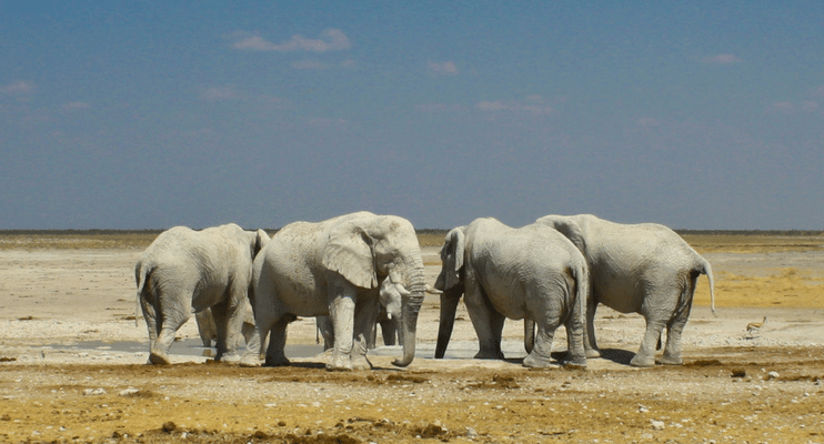WVac15-sunway-safari-Etosha-white-elephant-dust-salt-pan-Namibia-Africa-waterhole-photo