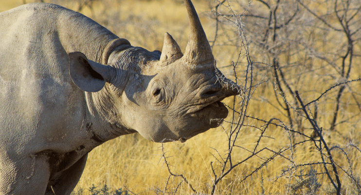 WVac15-sunway-safari-Namibia-Etosha-rhino-big5-wildlife-photography-Africa-lucky