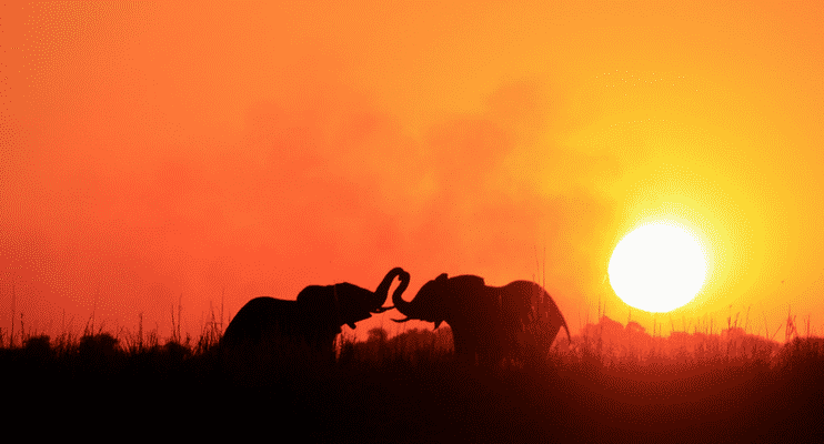 NBa21-sunway-safari-chobe-botswana-elephants-sunset-photography-dusk-orange-sky