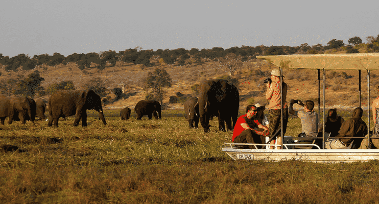NBa21-sunway-safari-chobe-elephant-cruise-sightseeing-photography