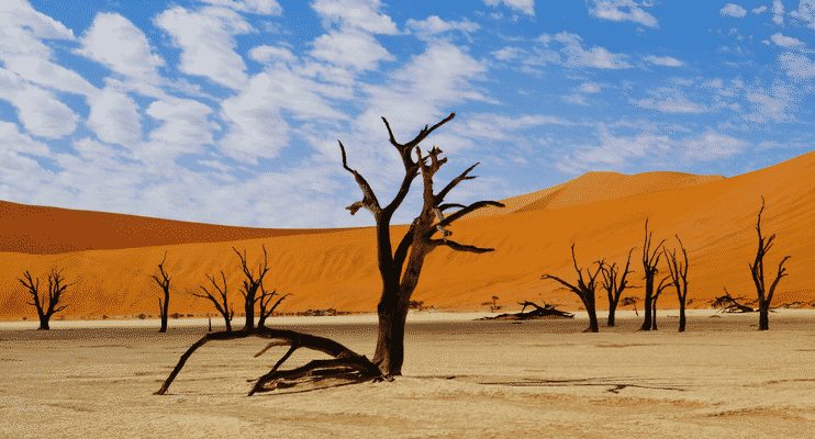 NBa21-sunway-safari-namibia-sossusvlei-tree-orange-stark