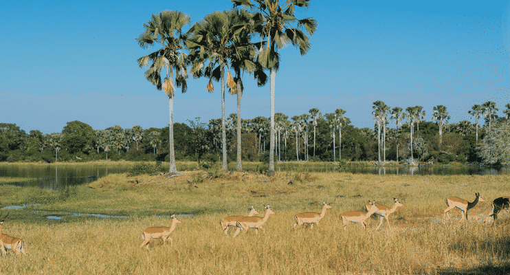 ZMa16-sunway-safari-malawi-animals-wildlife-tree-liwonde-national-park