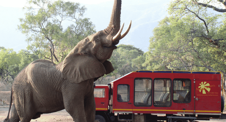 ZMa16-sunway-safari-red-truck-operations-vehicle-travel-elephant-visitor-campsite