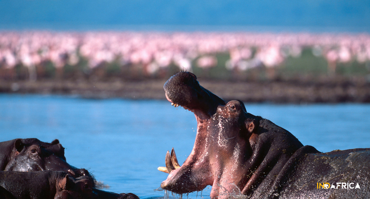 Budget-Tanzania-Safari-Lake-Manyara-Flamingos-Hippo-Indafrica-Travel