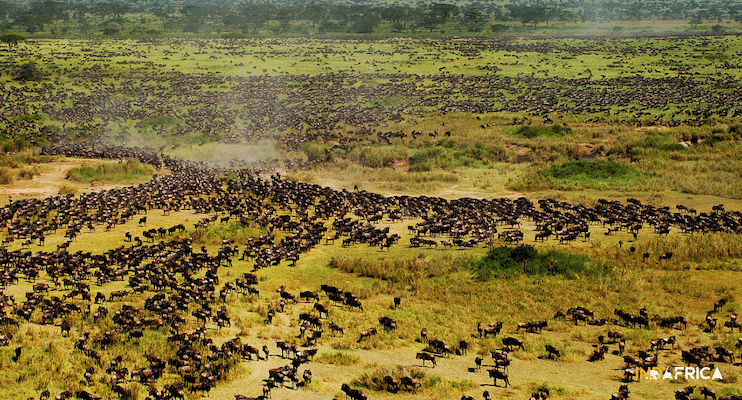 Budget-Tanzania-Safari-Migration-Wildebeest-Indafrica-Travel