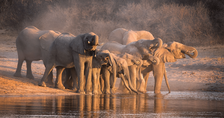 Where to go on safari in September.  Large herds of elephants can be seen in Tarangire National Park in Tanzania.